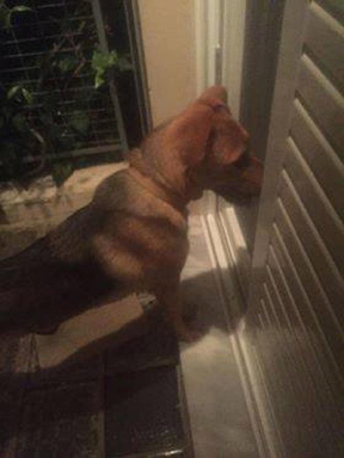 Η νεαρή σκυλίτσα της φωτογραφίας βρέθηκε να τριγυρνά στα Μελίσσια.