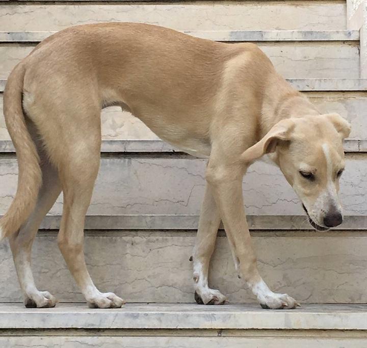 """""""Εμφανίστηκε αυτή η φιλική όμορφη νεαρή σκυλίτσα χθές στο σπίτι μας."""
