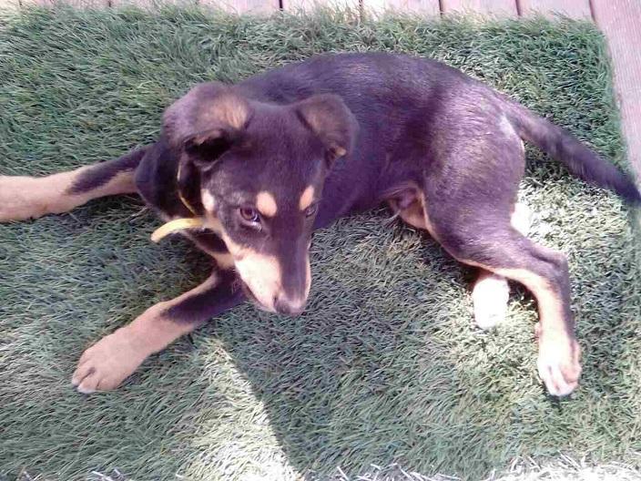Χάθηκε ο σκύλος μας Σάββατο πρωί στο κέντρο του Χαλανδρίου.