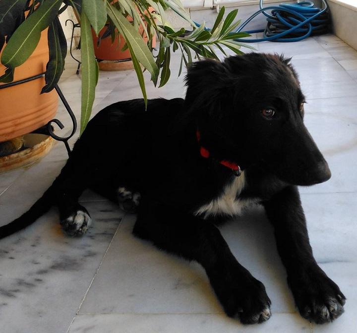 Βρέθηκε αυτή η σκυλίτσα στα Βριλήσσια, στην Υμηττού 72.