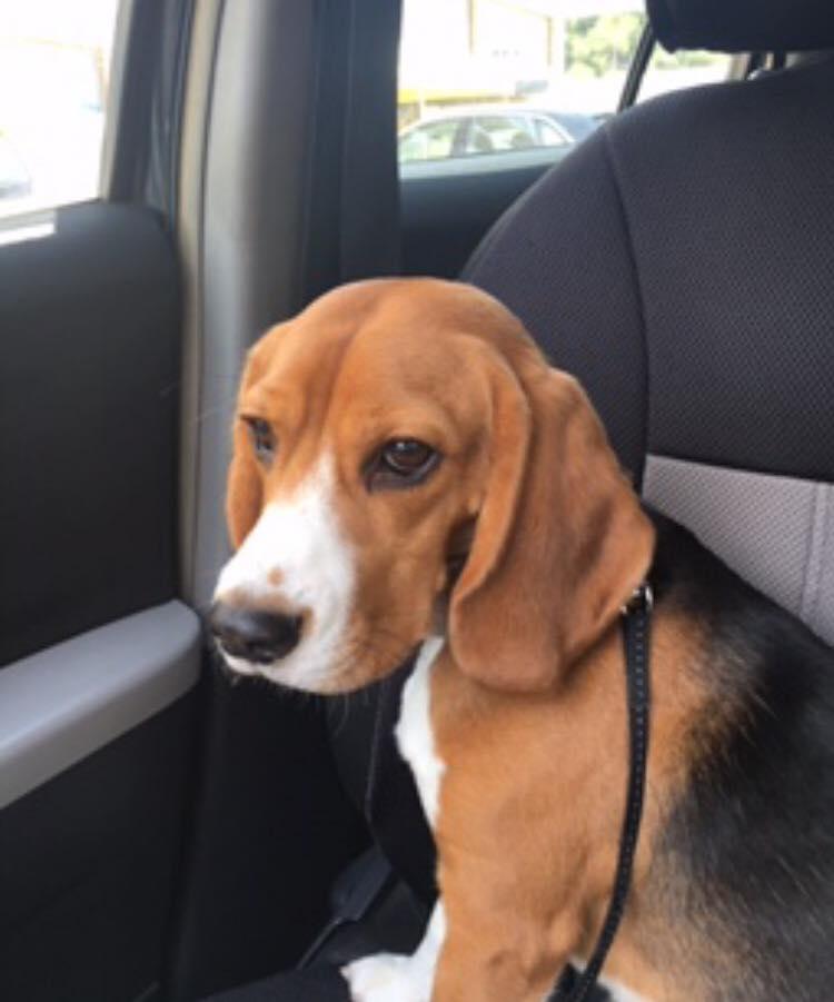 Χάθηκε σήμερα, Πέμπτη 19 Οκτωβρίου, στην περιοχή των Βριλησσίων το σκυλάκι της φωτογραφίας.