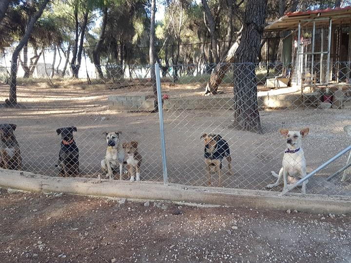 Puppy Day Adoption Day, αύριο Σάββατο 1 Σεπτεμβρίου, στην Κηφισιά.