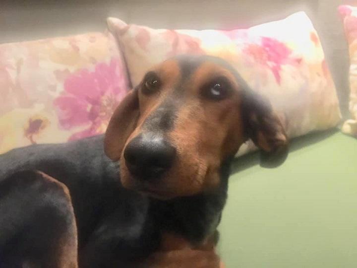 """Βρέθηκε μικρόσωμη σκυλίτσα στην Εκάλη στον """"Νάρκισσο""""."""
